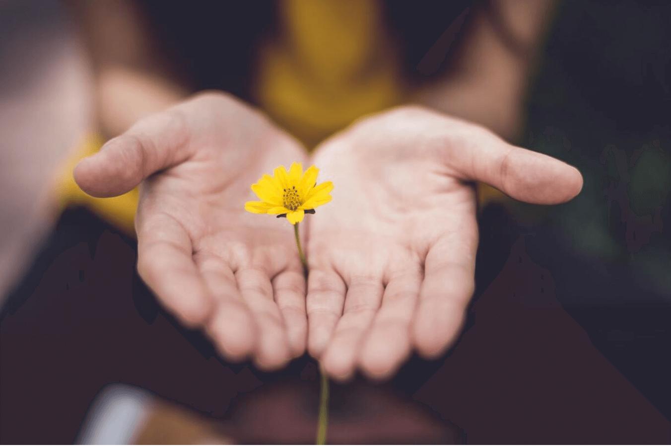The evolution of forgiveness